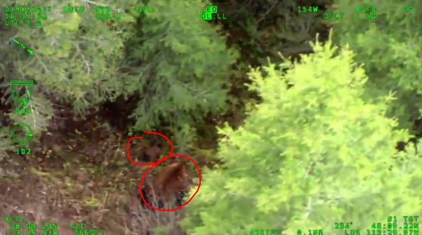 Bear and cubs found in the area