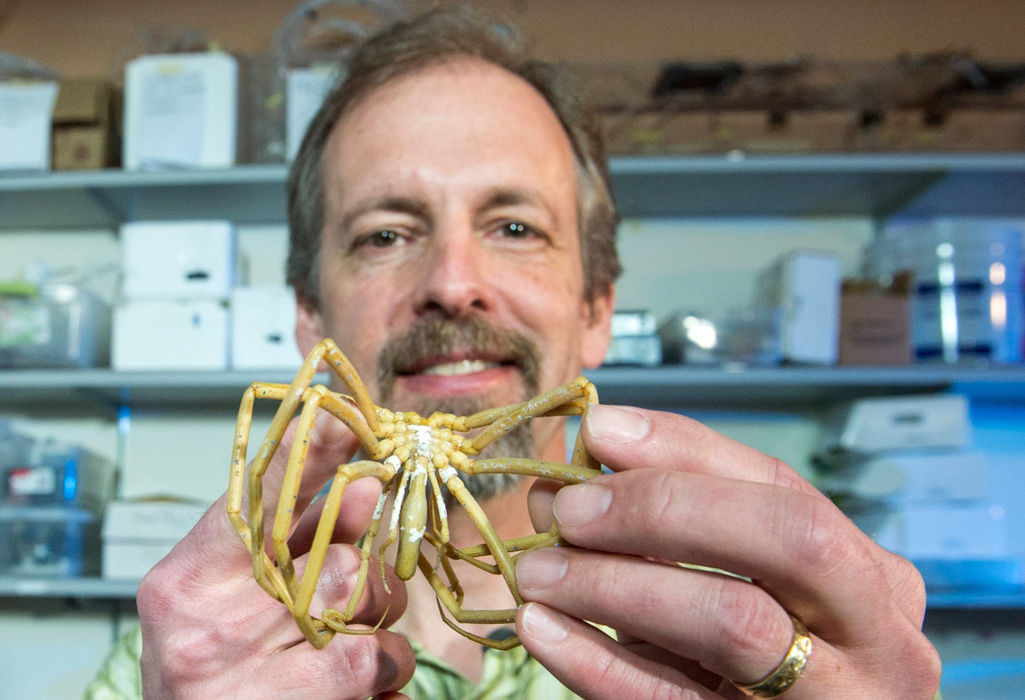 UM Researcher Art Woods holds an Antarctic sea spider in his UM lab.